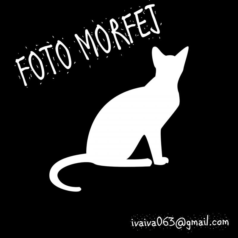cat-1185475_1280SADF