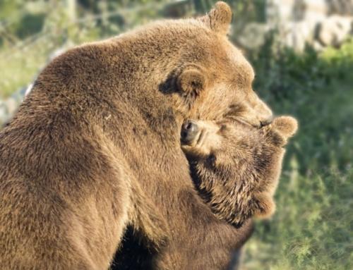 Utočište za mlade medvjede Kuterevo